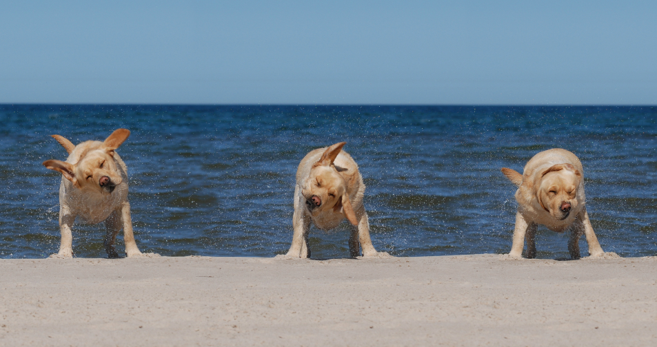 dogs-on-the-beach-iStock_000003224276
